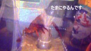 美顔エステ w  Crawfish