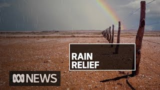 NSW sees decent rainfall across many fire grounds | ABC News