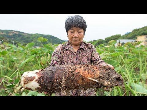 Tackling poverty with taro in China
