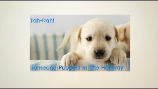 Best Way To Potty Train A Puppy To Go Outside - Puppy Potty Training Tips