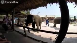САМОЕ СМЕШНОЕ ВИДЕО ГОДА, Танец слона циркача