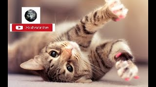 World Cat Comedy ♥Cute Cats and Kittens Doing Funny Things 2020♥ #Funk