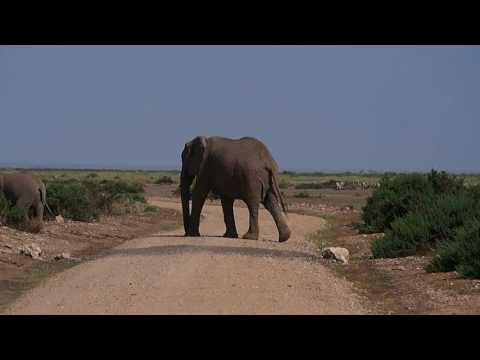 PC298738   Olifanten Amboseli NP