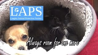 LAPS - The Little Shelter that Could