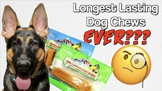 Himalayan Dog Chew Review: Longest lasting chew EVER?