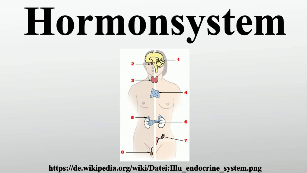 Hormonsystem - YouTube