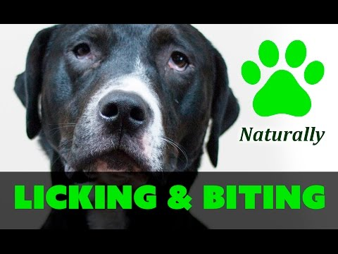 how-to-stop-your-dog-from-licking-and-biting-paws-naturally!