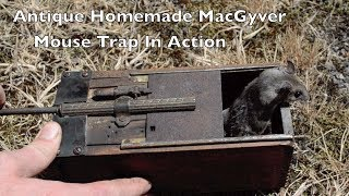 Antique MacGyver Mouse Trap In Action with Motion Cameras. *Honey Bee Hunting Trap*