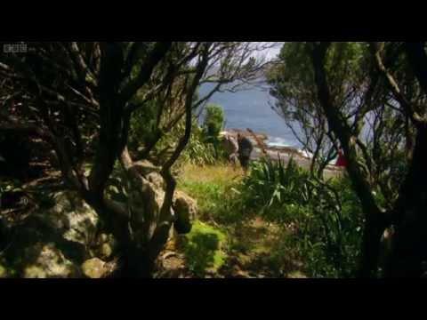 Last Chance to See 5   Kakapo 2009