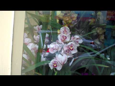 Special Orchid Sale