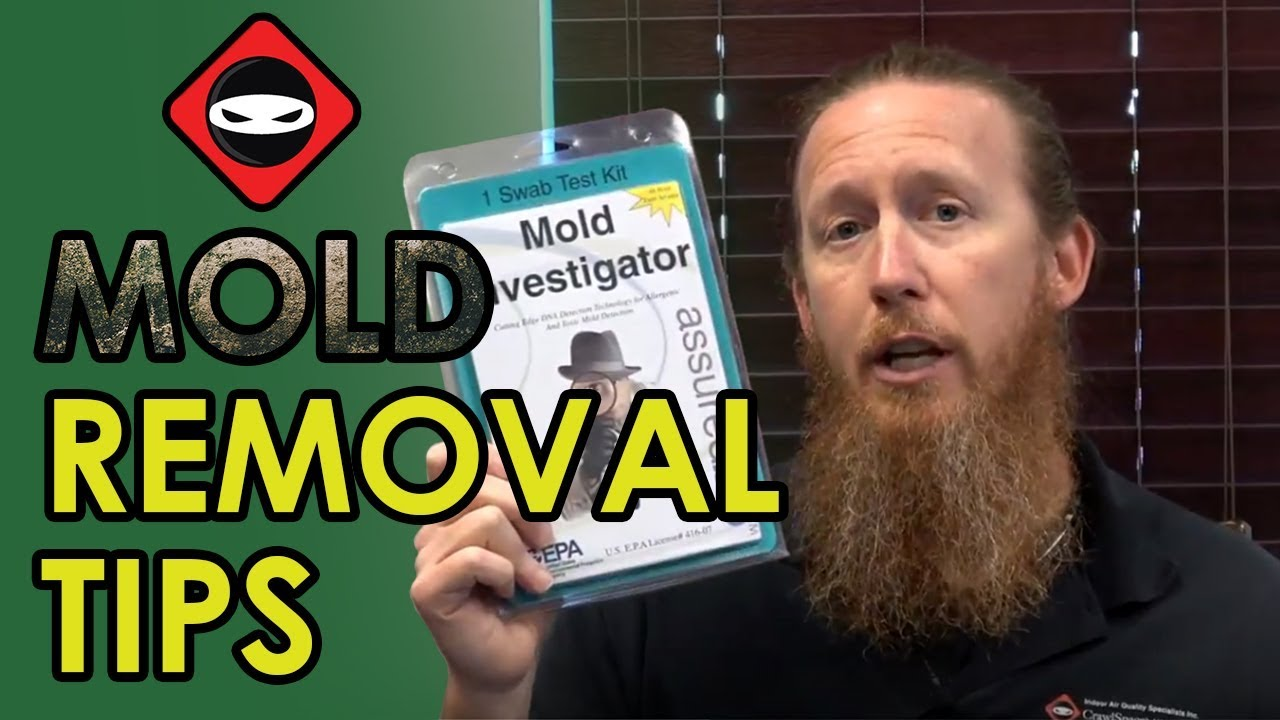 Crawl space mold removal tips diy mold remediation crawl space crawl space mold removal tips diy mold remediation crawl space solutioingenieria Choice Image