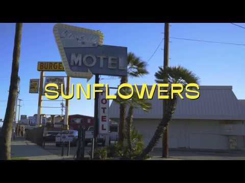 Rex Orange County - Sunflower [Offical Music Video]