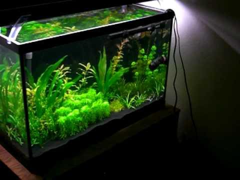 29 Gallon Planted Tank - YouTube