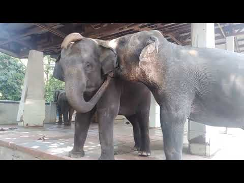 Yangon Zoological Garden   Recreational Park in Yangon   Yangon Sightseeing 2020