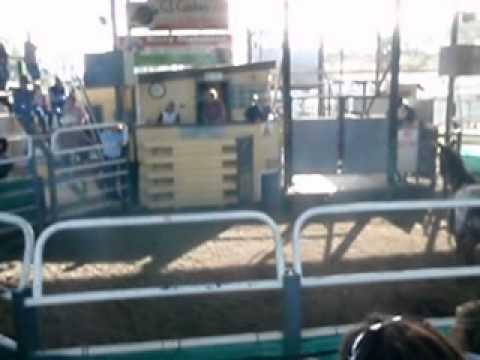 Australian Horse Sales ~ Death March