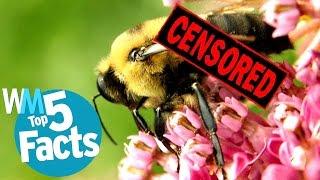 Top 5 Shocking Animal Sex Facts