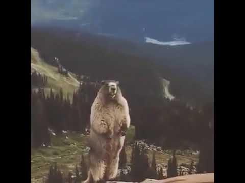Суслик орёт в горах!