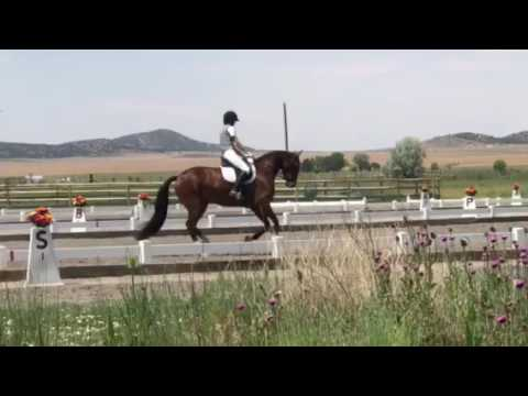 Intuition and Jamie ringger FEI 4 year old test