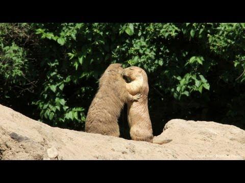 Tierpark Zoo - In A Berlin Minute (Week 163) [HD]