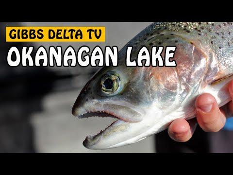 Okanagan Lake Rainbow Trout | Gibbs Delta TV Episode Five
