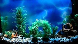 Полезное видео для всех владельцев аквариумов и рыбок. Как правильно выбрать корм для рыб.(Наш паблик https://vk.com/otziv52 Аквариумный салон