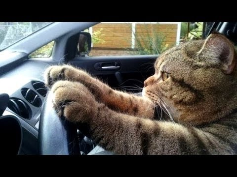 funny cats images collection video