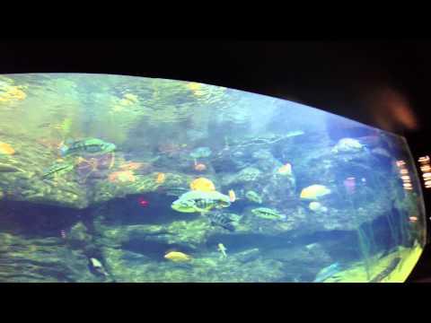 Fish Of Lake Nicaragua   TN AQ