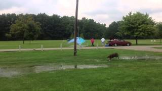 Ultimate Air Dogs Paws At The Hill In Sterling Heights, Mi