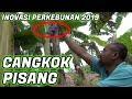 Pak Ndul - Teknik Cangkok Pisang