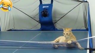 graciosos divertidos  bromendo gatos graciosos - funny cats fails