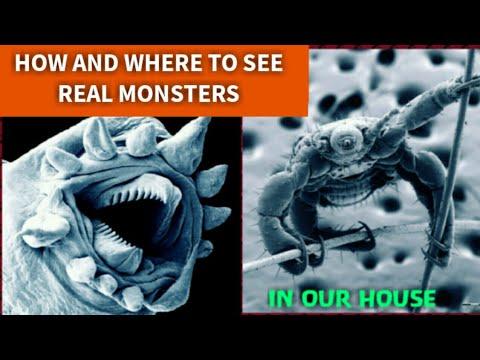 هیولا هایی در خانه ما