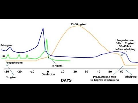 Canine Ovulation detector test (draminski) successful