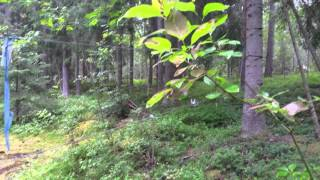 поход за грибами и как мы заблудились в лесу(, 2015-07-26T20:39:21.000Z)