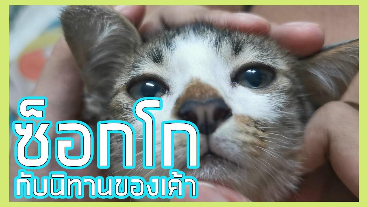 ซ็อกโกแมวโง่ : กับนิทานของเค้า ! (คลิปลูกแมว)