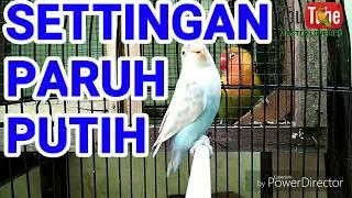 Lovebird, CARA SETTING PARUH PUTIH