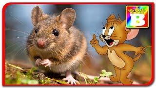 Animale reale vs animale din desene animate  Animalele si sunetele lor la Bogdan`s Show