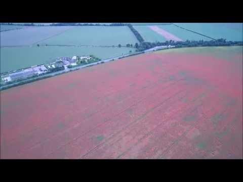 Pink Poppy Fields, Barley, Hertfordshire (2)  -  Skydronauts.uk