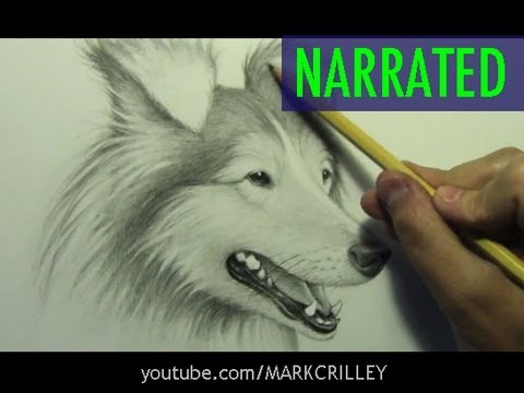 How To Draw Dog Narrated Step By Step