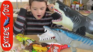"Megalodon Shark Toy Goes Crazy and Eats all the Candy! ""Shark and Barracuda Toy"""