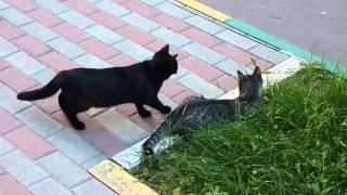 Прикольные кошки коты ловят птичек Забавно смотреть!!