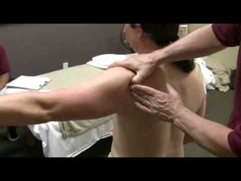 Treatment of the Shoulder - Seated Infraspinatus, Teres (minor, major)