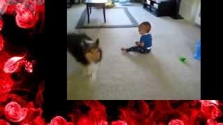 Приколы с собаками и детьми Малышка любит свою собак  приколы с собакамиmp4