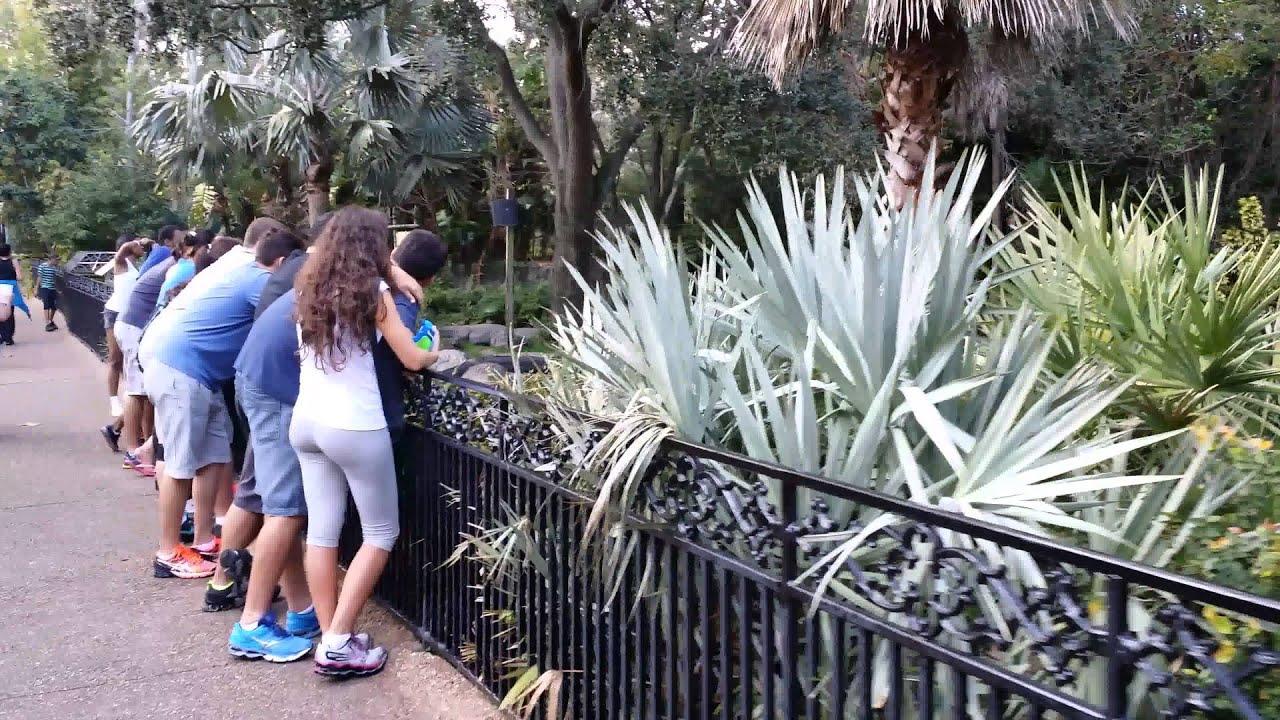 Alligators @ Busch Gardens