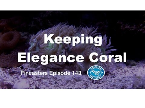 Keeping Elegance Coral Fincasters Episode 143 Youtube