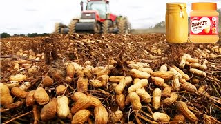 How Peanut Butter Is Made, Peanut Harvesting And Processing With Modern Technology