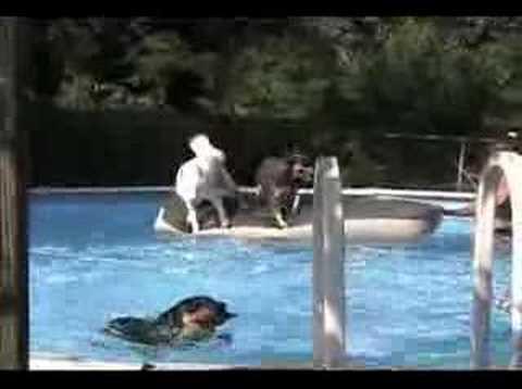 more-redneck-navy-seal-training