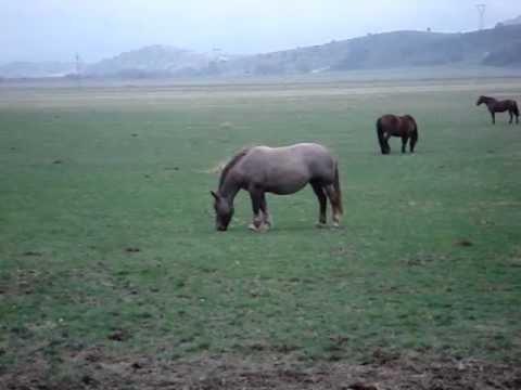 maltrattamenti ad animali.MPG