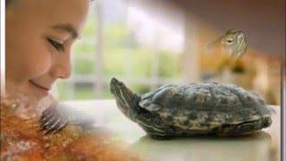 Черепахи   Красноухая черепаха  Фото черепах