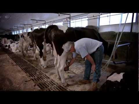 Massachusetts Dairy