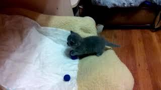 Первые шаги котенка Аси в новой квартире